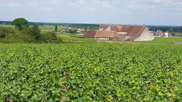 Parcel at En Orveaux towards Clos Vougeot